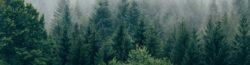 Plastmiljöarbete för skogens skull